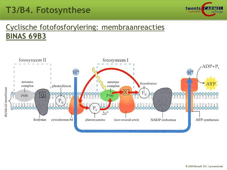 T3/B4. Fotosynthese Cyclische fotofosforylering: membraanreacties BINAS 69B3