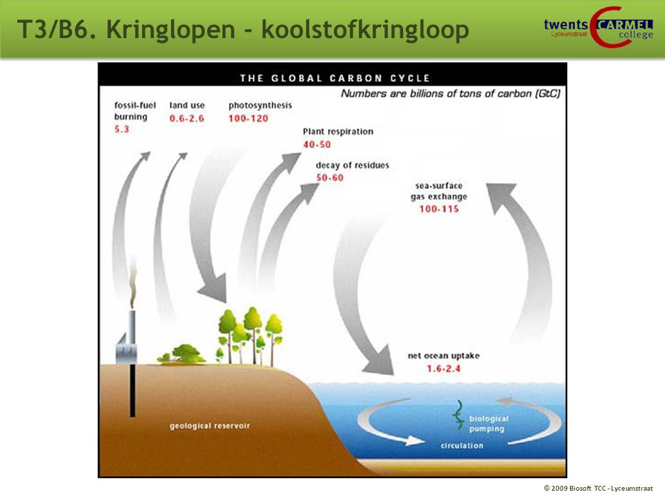 T3/B6. Kringlopen - koolstofkringloop