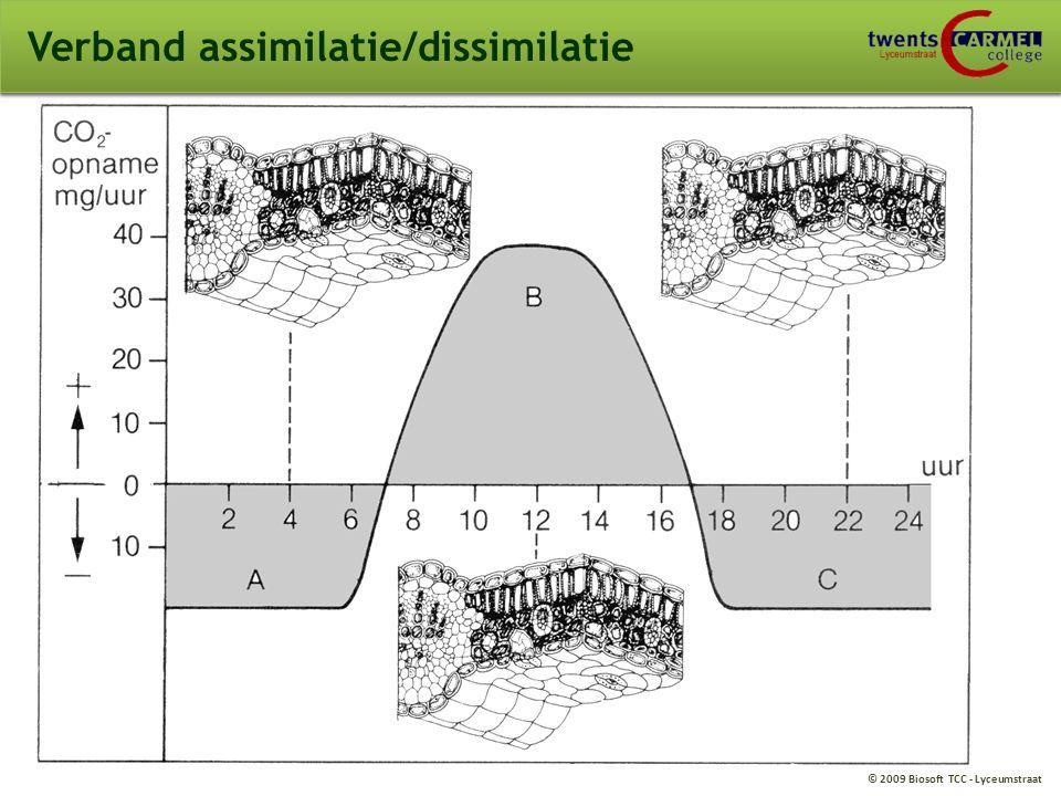 Verband assimilatie/dissimilatie