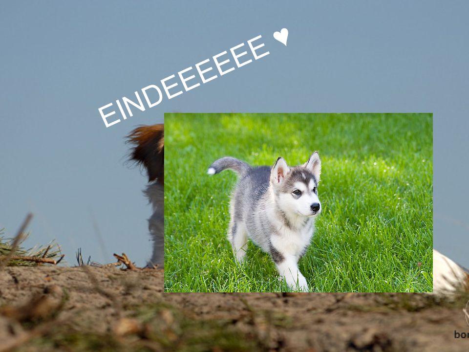 EINDEEEEEE ♥