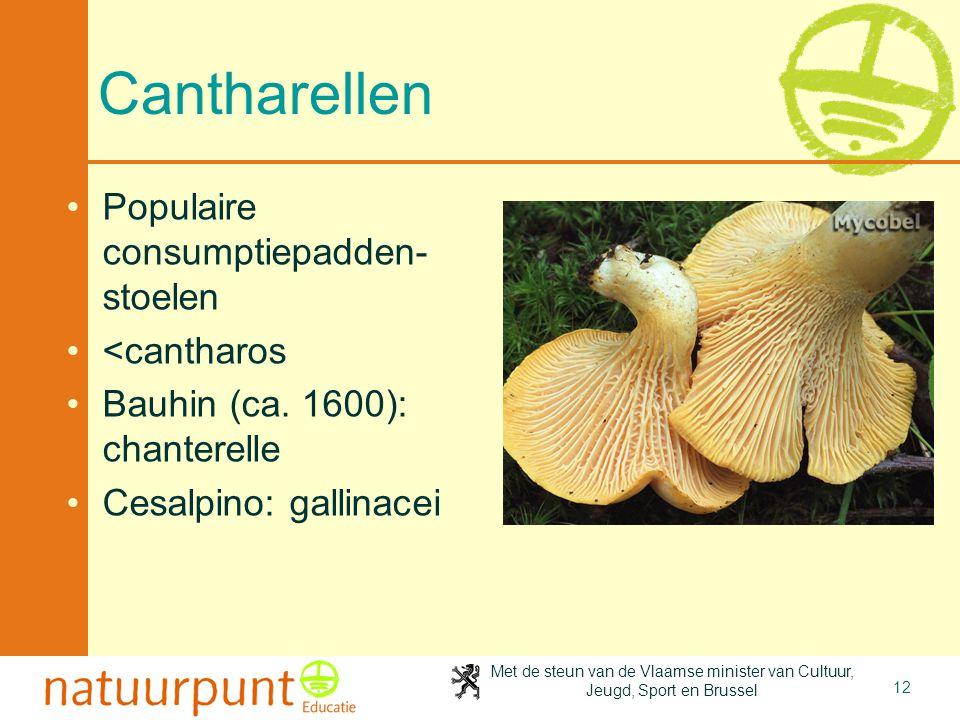 Cantharellen Populaire consumptiepadden-stoelen <cantharos