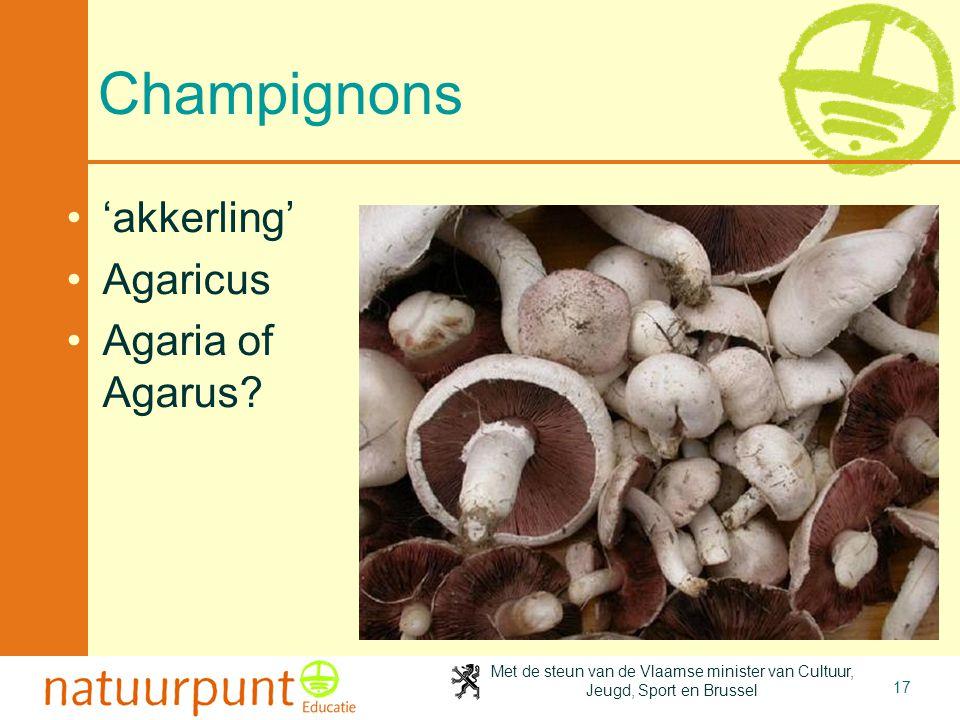 4-4-2017 Champignons 'akkerling' Agaricus Agaria of Agarus