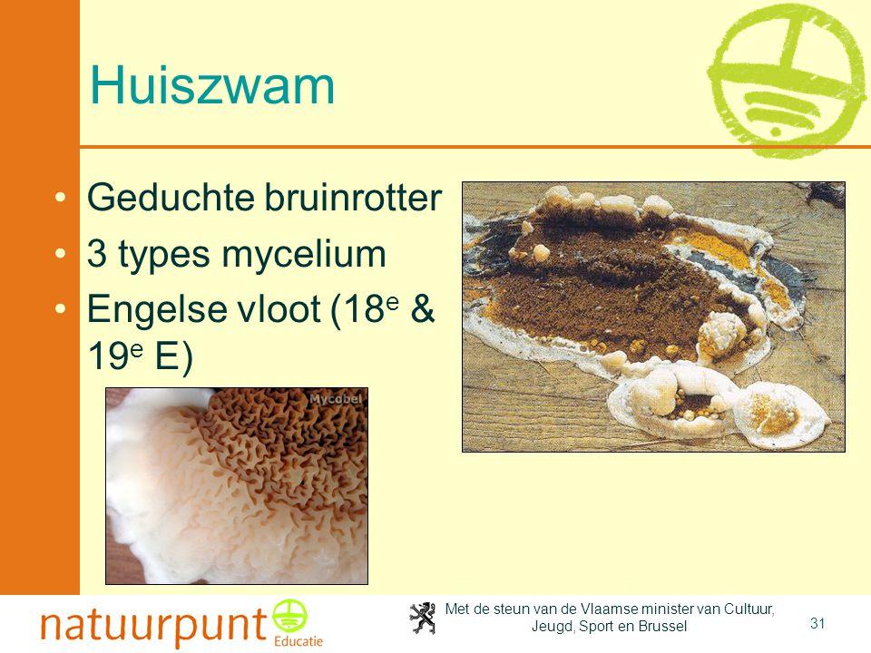 Huiszwam Geduchte bruinrotter 3 types mycelium