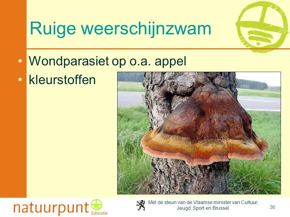 4-4-2017 Ruige weerschijnzwam Wondparasiet op o.a. appel kleurstoffen