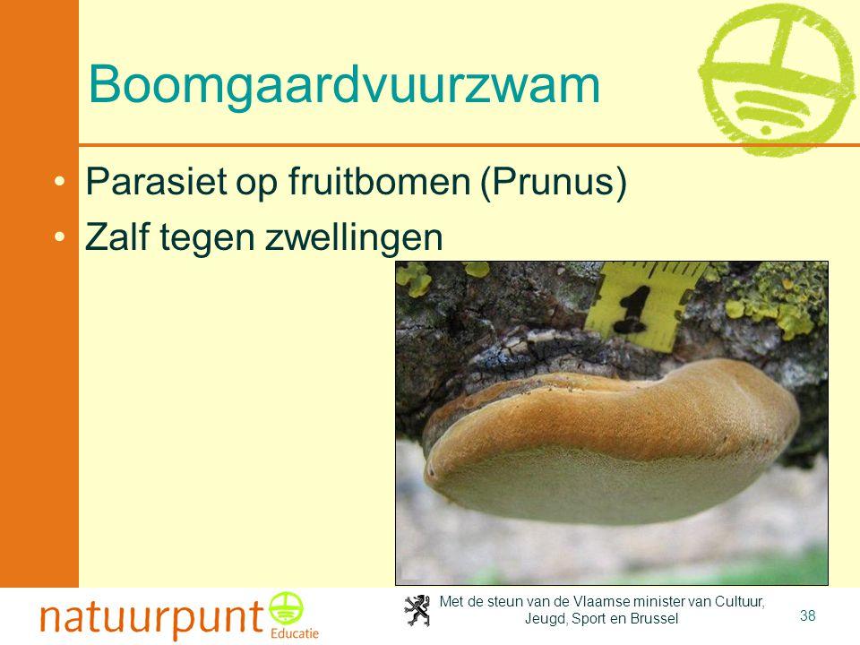 Boomgaardvuurzwam Parasiet op fruitbomen (Prunus)