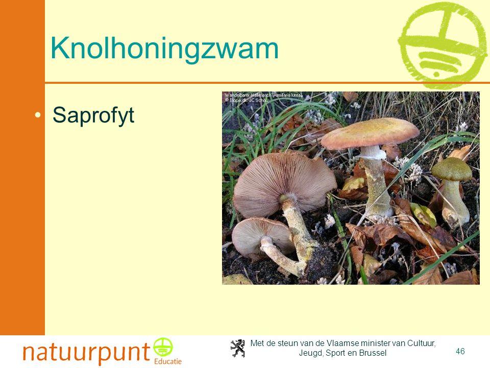 4-4-2017 Knolhoningzwam Saprofyt