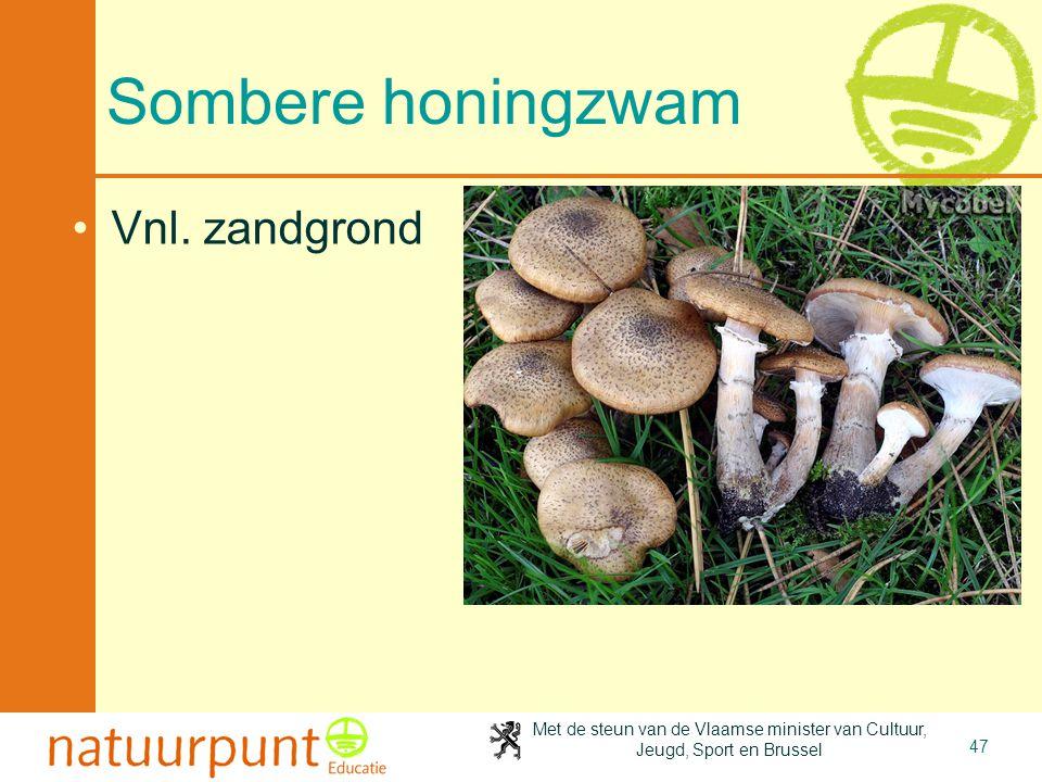 4-4-2017 Sombere honingzwam Vnl. zandgrond