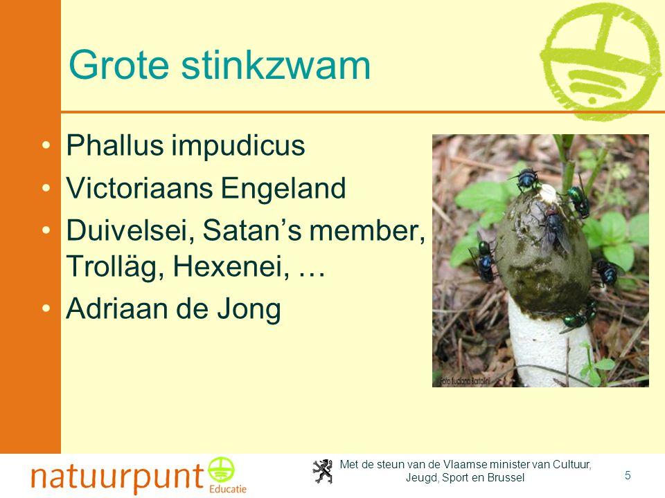 Grote stinkzwam Phallus impudicus Victoriaans Engeland