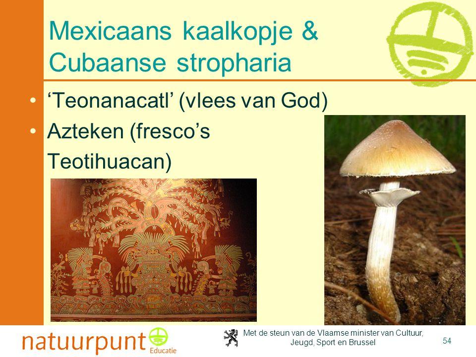 Mexicaans kaalkopje & Cubaanse stropharia