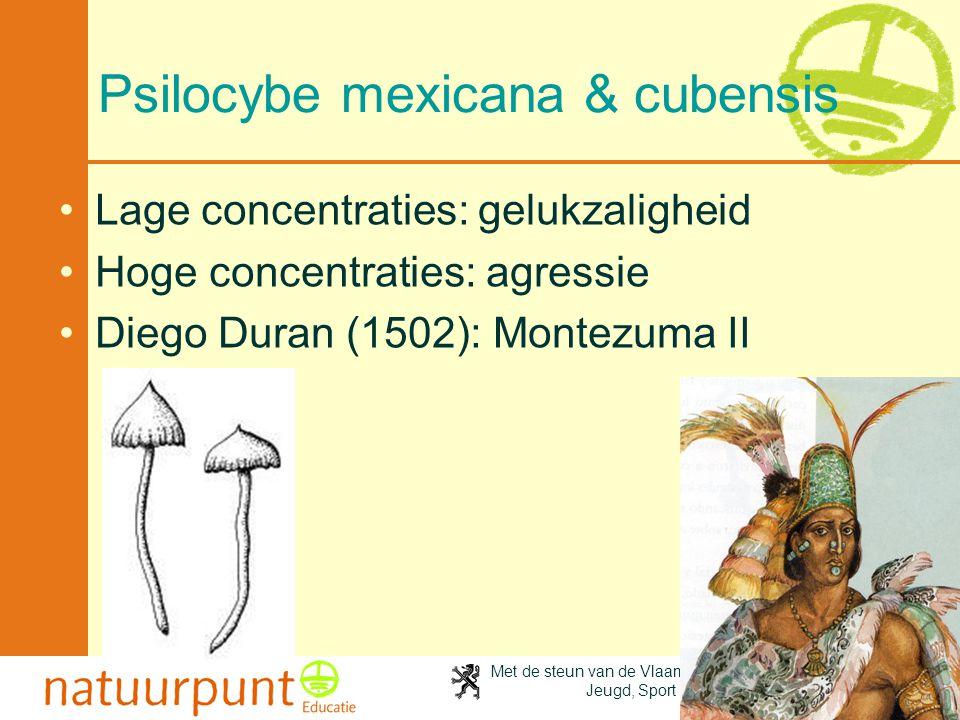 Psilocybe mexicana & cubensis