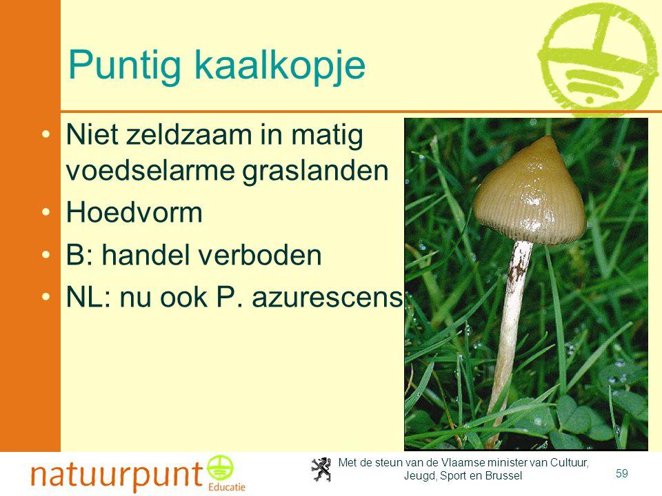 Puntig kaalkopje Niet zeldzaam in matig voedselarme graslanden