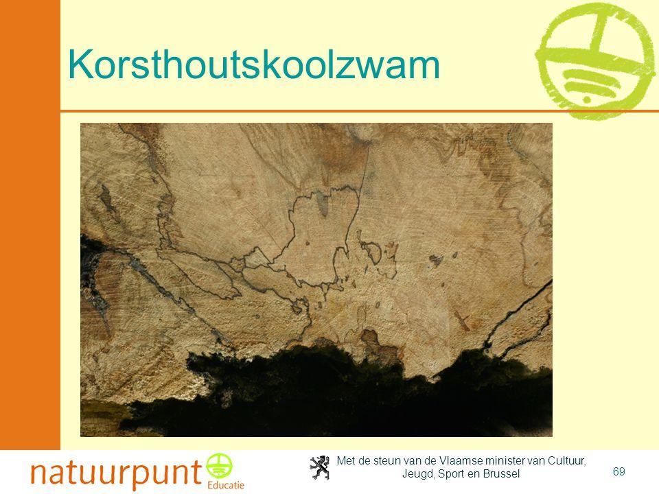 4-4-2017 Korsthoutskoolzwam