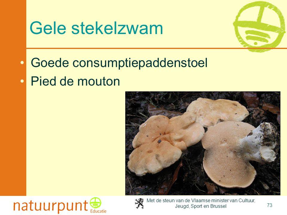 4-4-2017 Gele stekelzwam Goede consumptiepaddenstoel Pied de mouton