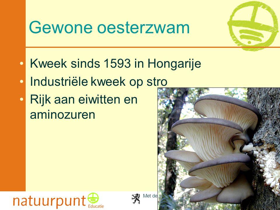 Gewone oesterzwam Kweek sinds 1593 in Hongarije