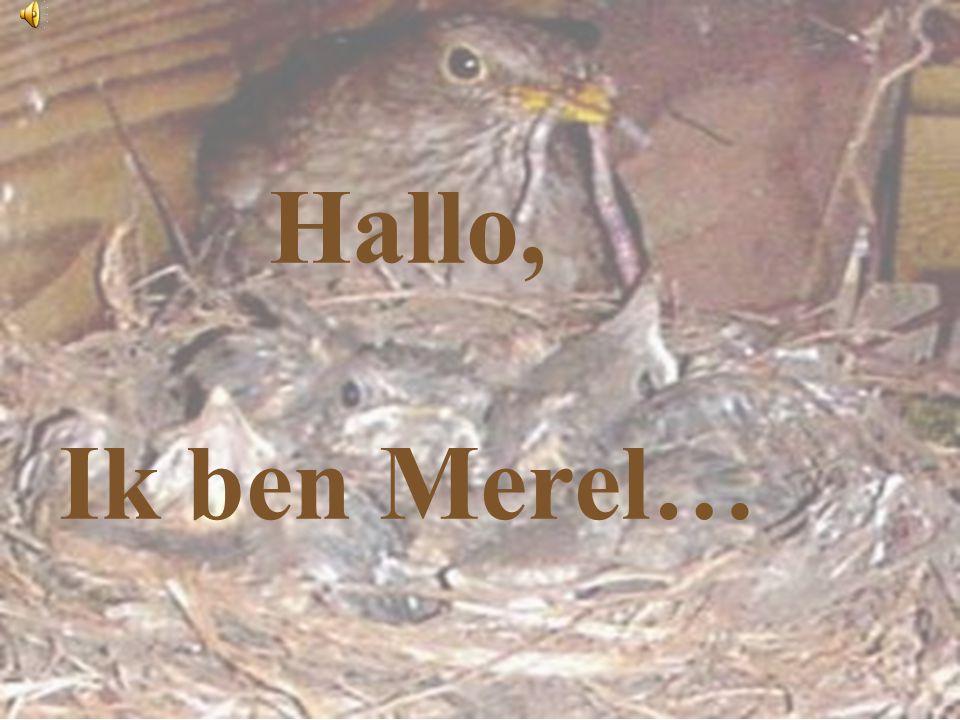 Hallo, Ik ben Merel…