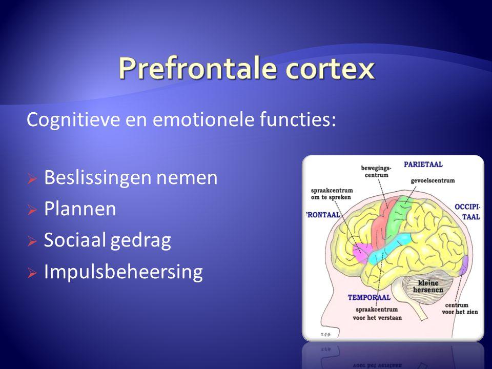Prefrontale cortex Cognitieve en emotionele functies: