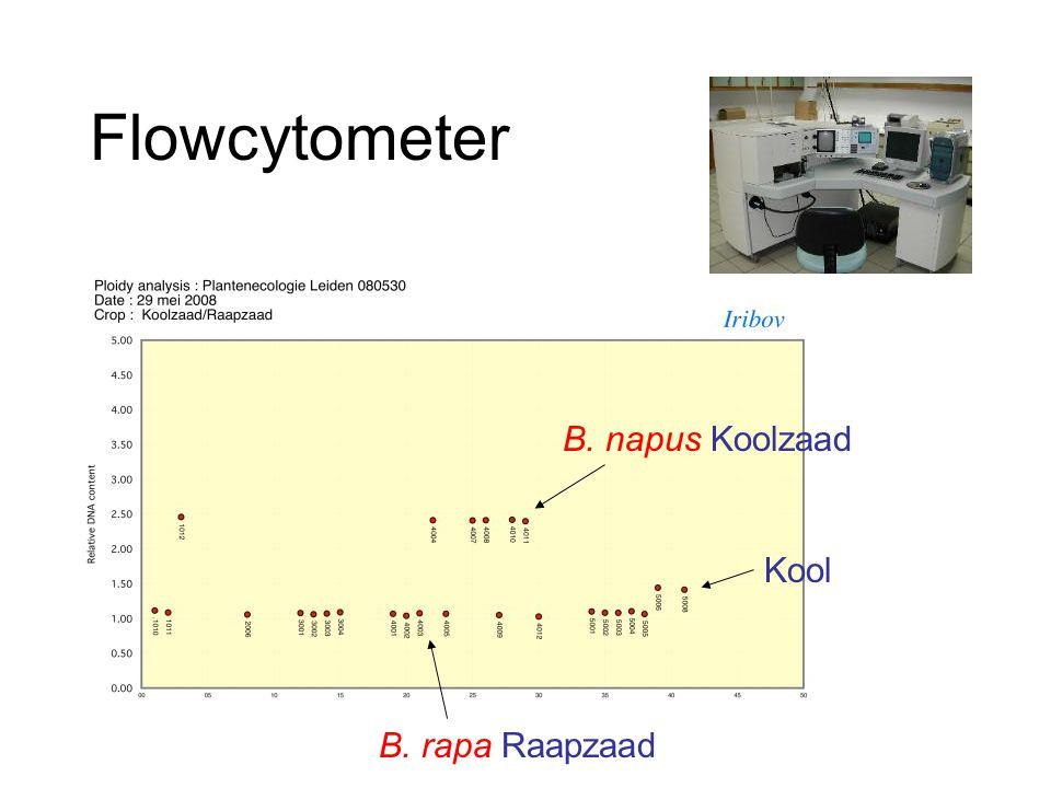 Flowcytometer B. napus Koolzaad Kool B. rapa Raapzaad