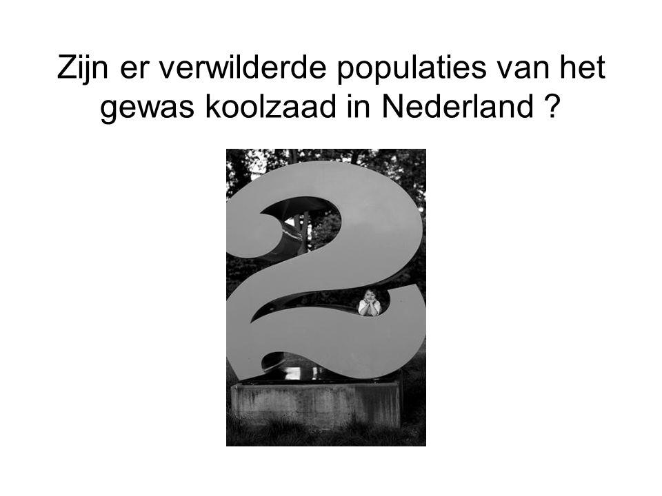 Zijn er verwilderde populaties van het gewas koolzaad in Nederland