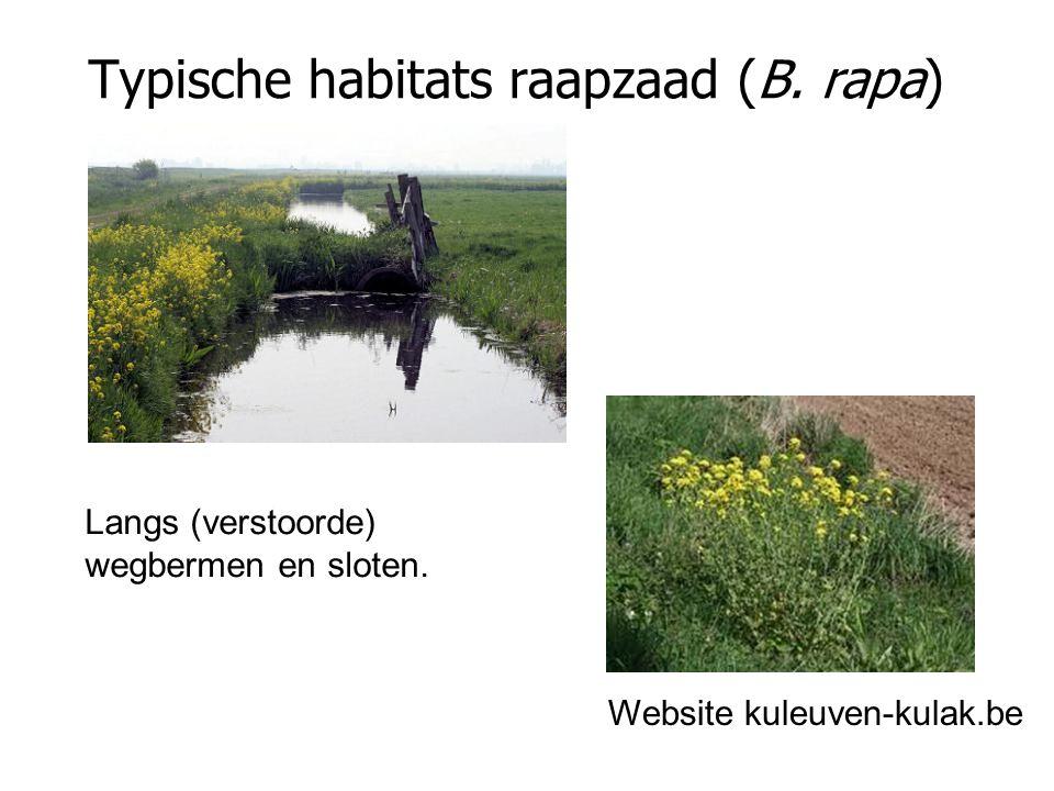 Typische habitats raapzaad (B. rapa)