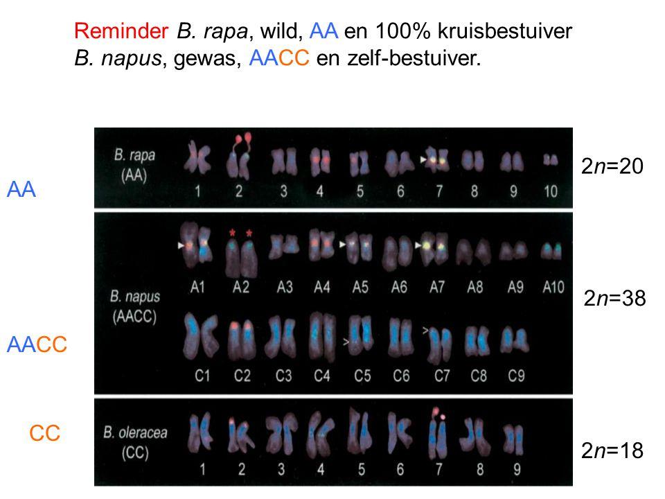 Reminder B. rapa, wild, AA en 100% kruisbestuiver