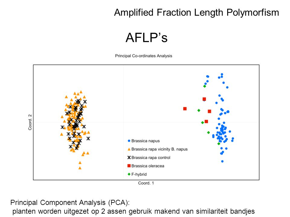 AFLP's Amplified Fraction Length Polymorfism
