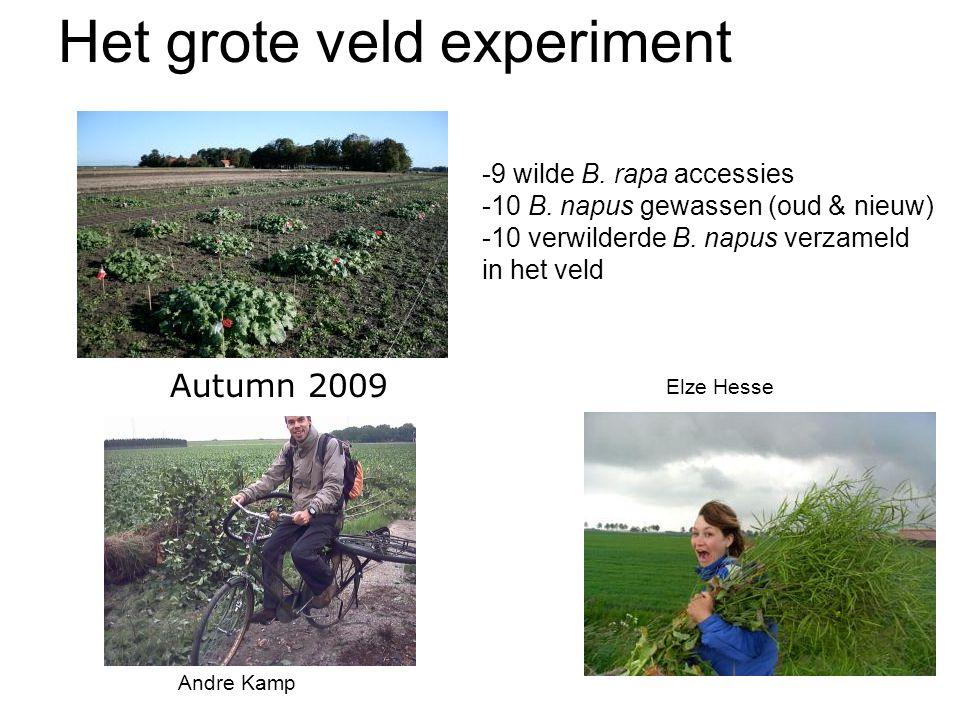 Het grote veld experiment