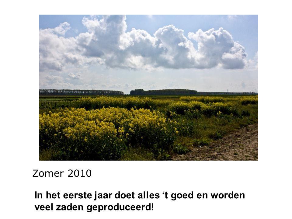 Zomer 2010 In het eerste jaar doet alles 't goed en worden veel zaden geproduceerd!