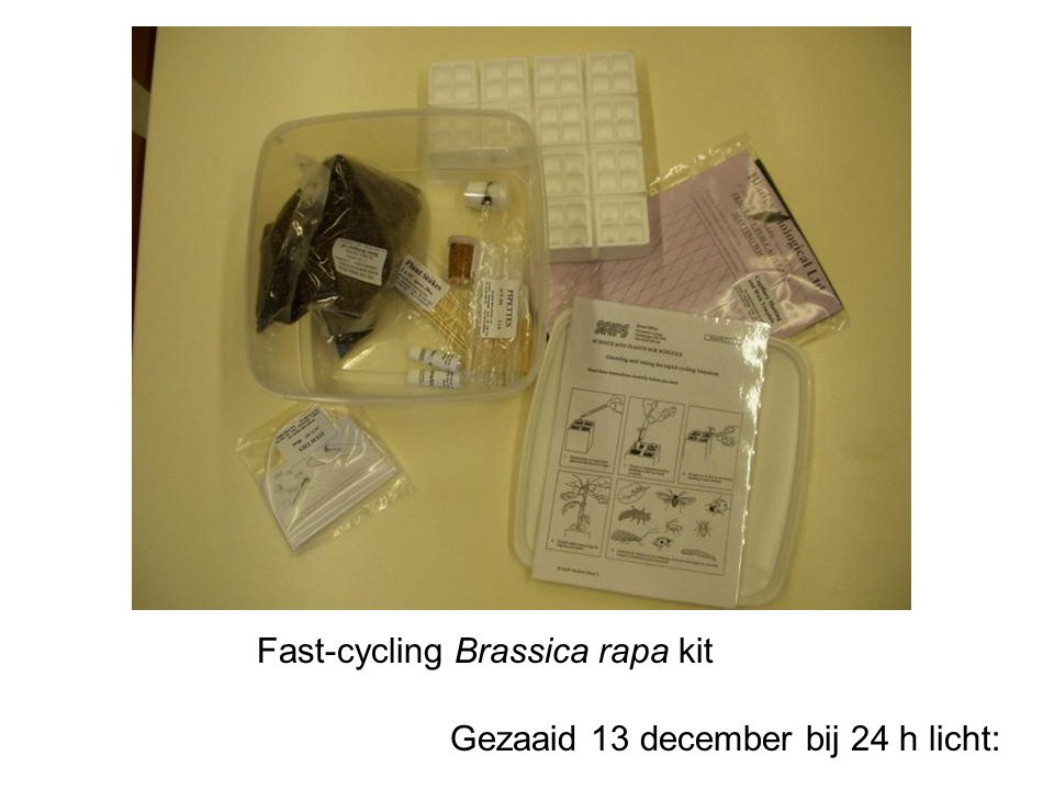 Fast-cycling Brassica rapa kit