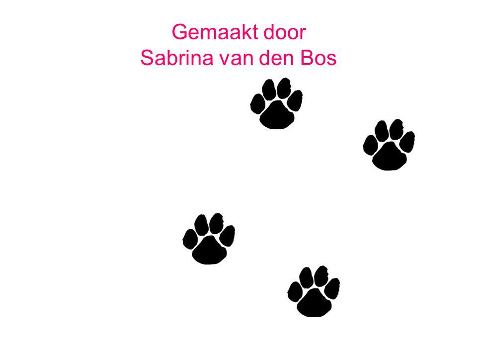 Gemaakt door Sabrina van den Bos