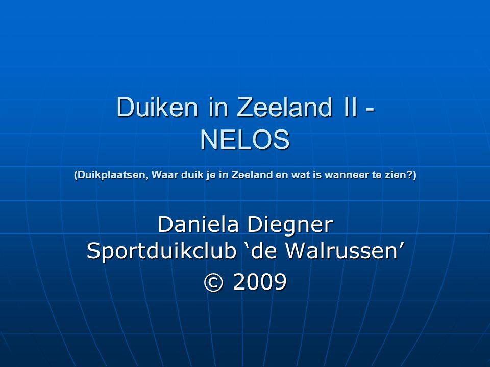 Daniela Diegner Sportduikclub 'de Walrussen' © 2009