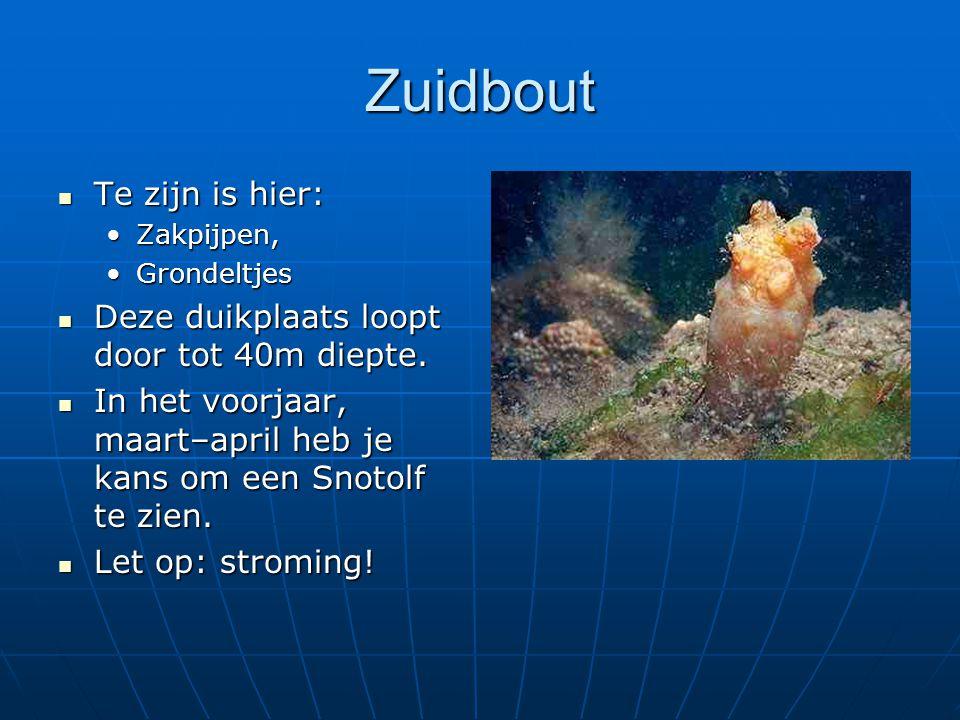 Zuidbout Te zijn is hier: Deze duikplaats loopt door tot 40m diepte.