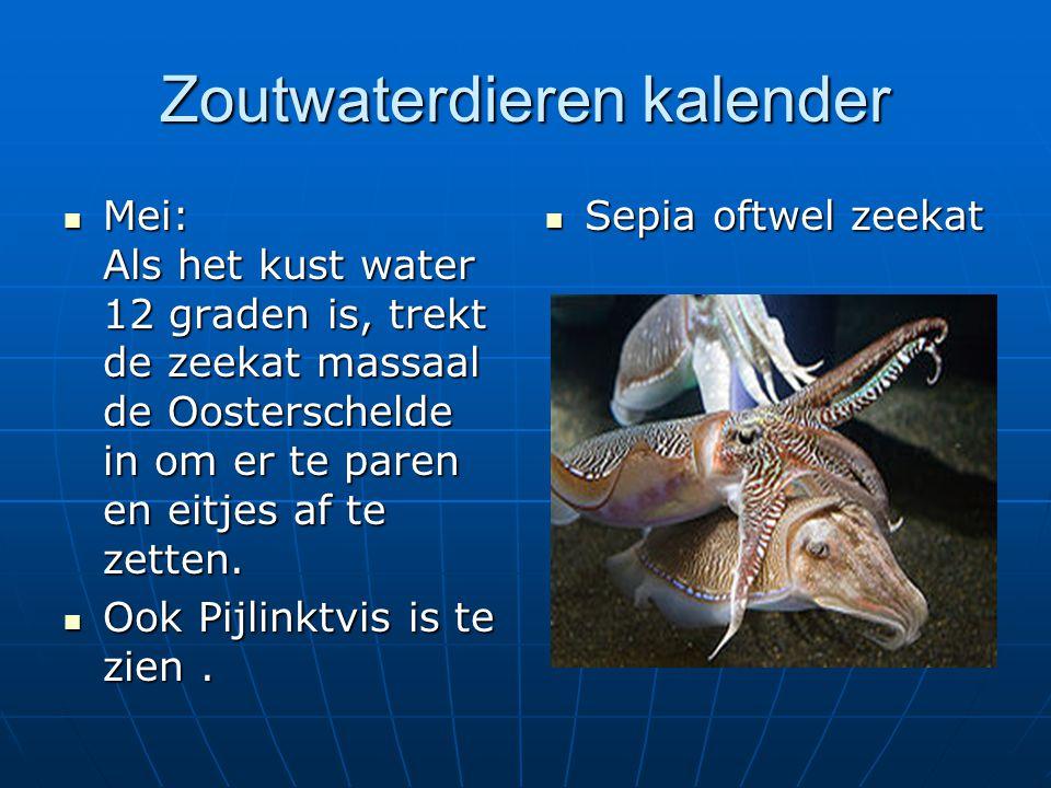 Zoutwaterdieren kalender