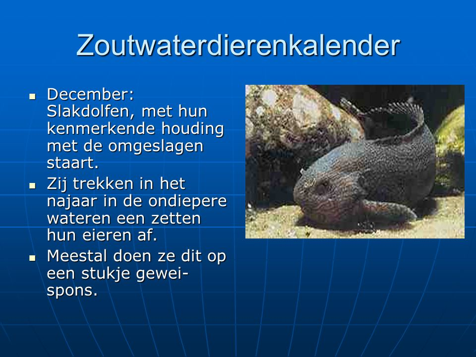 Zoutwaterdierenkalender