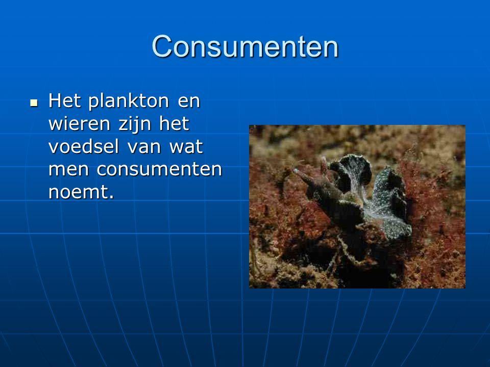 Consumenten Het plankton en wieren zijn het voedsel van wat men consumenten noemt.