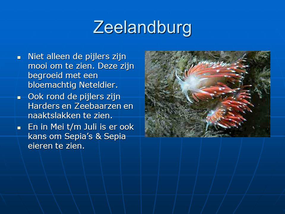 Zeelandburg Niet alleen de pijlers zijn mooi om te zien. Deze zijn begroeid met een bloemachtig Neteldier.