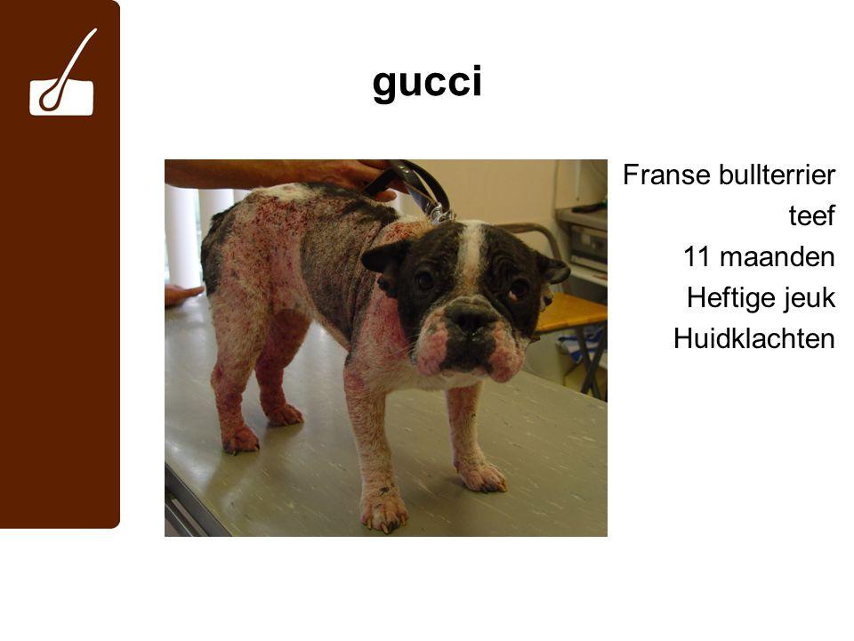 gucci Franse bullterrier teef 11 maanden Heftige jeuk Huidklachten 2
