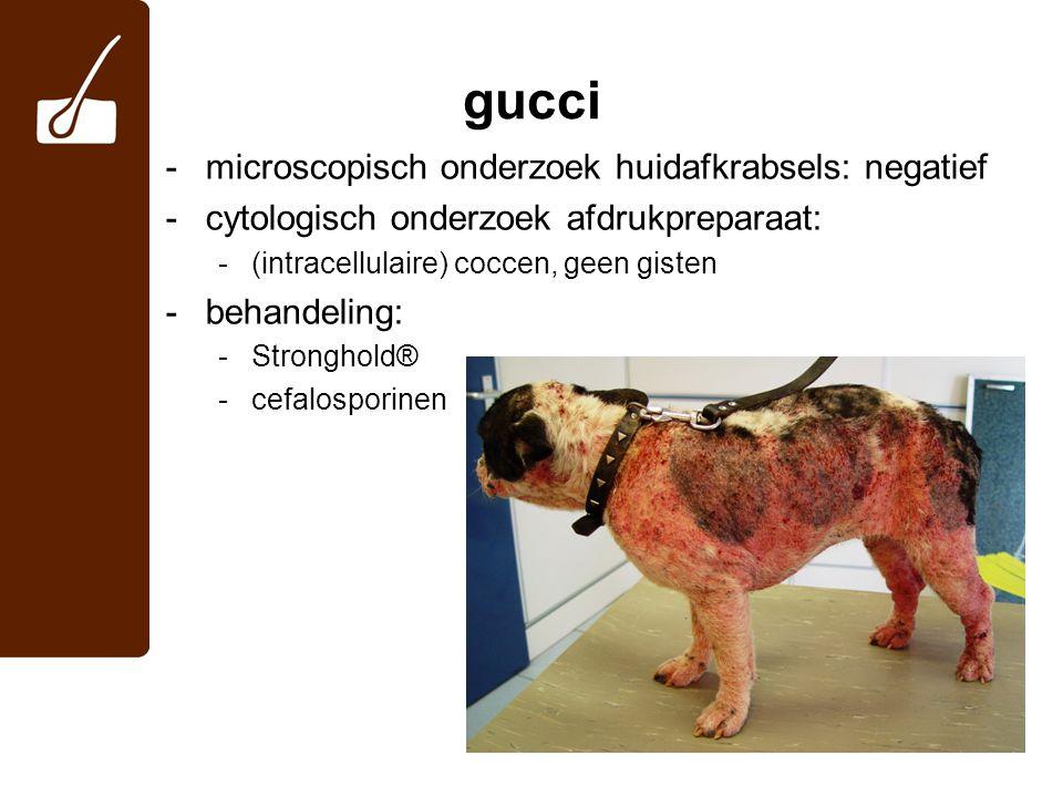 gucci microscopisch onderzoek huidafkrabsels: negatief