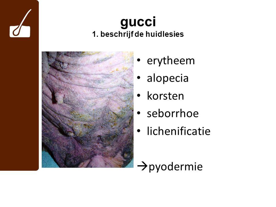 gucci 1. beschrijf de huidlesies