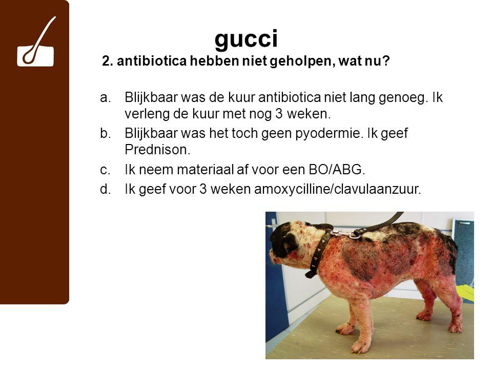 gucci 2. antibiotica hebben niet geholpen, wat nu