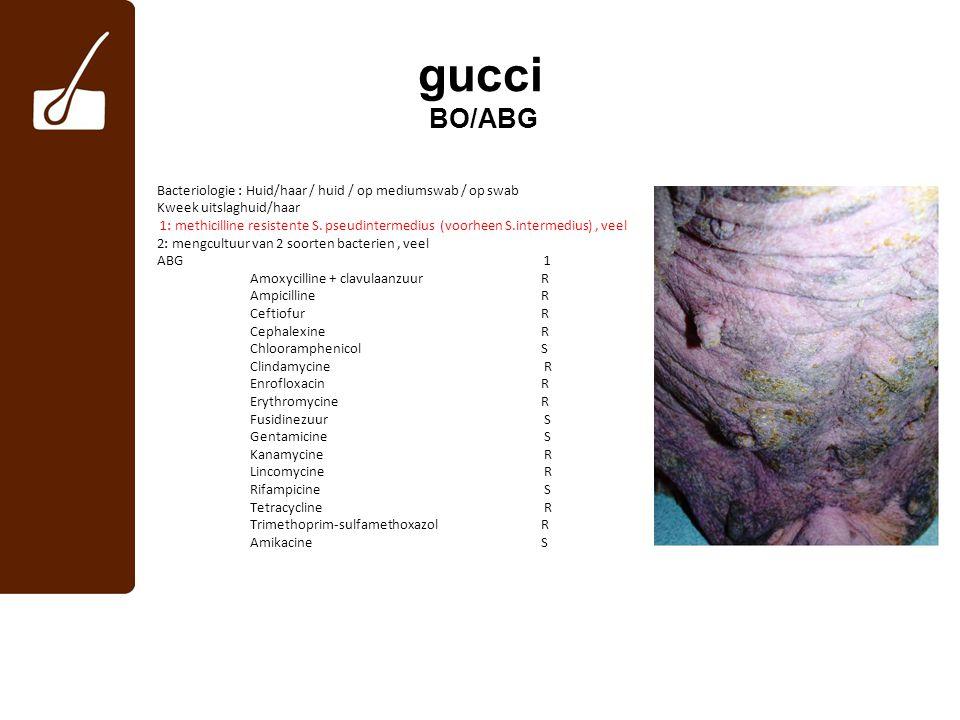 gucci BO/ABG Bacteriologie : Huid/haar / huid / op mediumswab / op swab. Kweek uitslaghuid/haar.