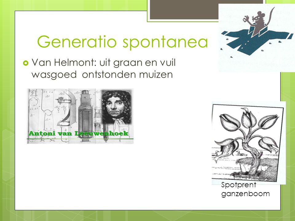 Generatio spontanea Van Helmont: uit graan en vuil wasgoed ontstonden muizen Spotprent ganzenboom