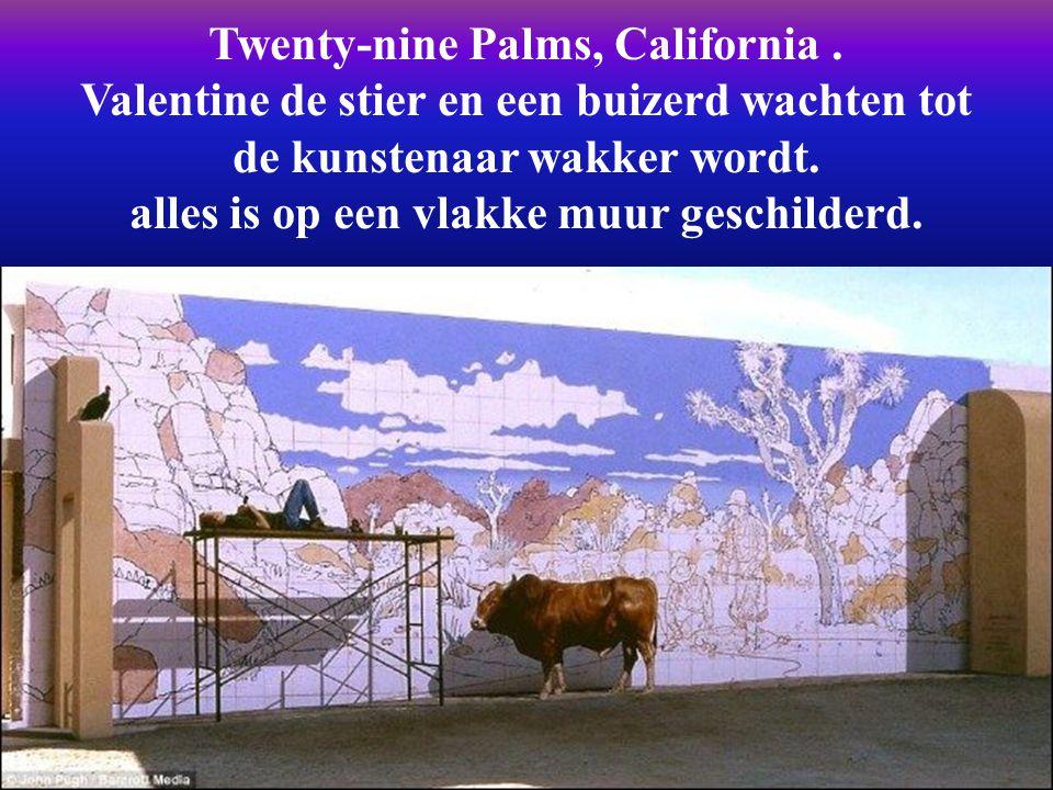 Twenty-nine Palms, California .