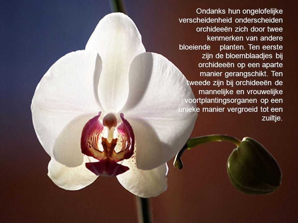 Ondanks hun ongelofelijke verscheidenheid onderscheiden orchideeën zich door twee kenmerken van andere bloeiende planten.