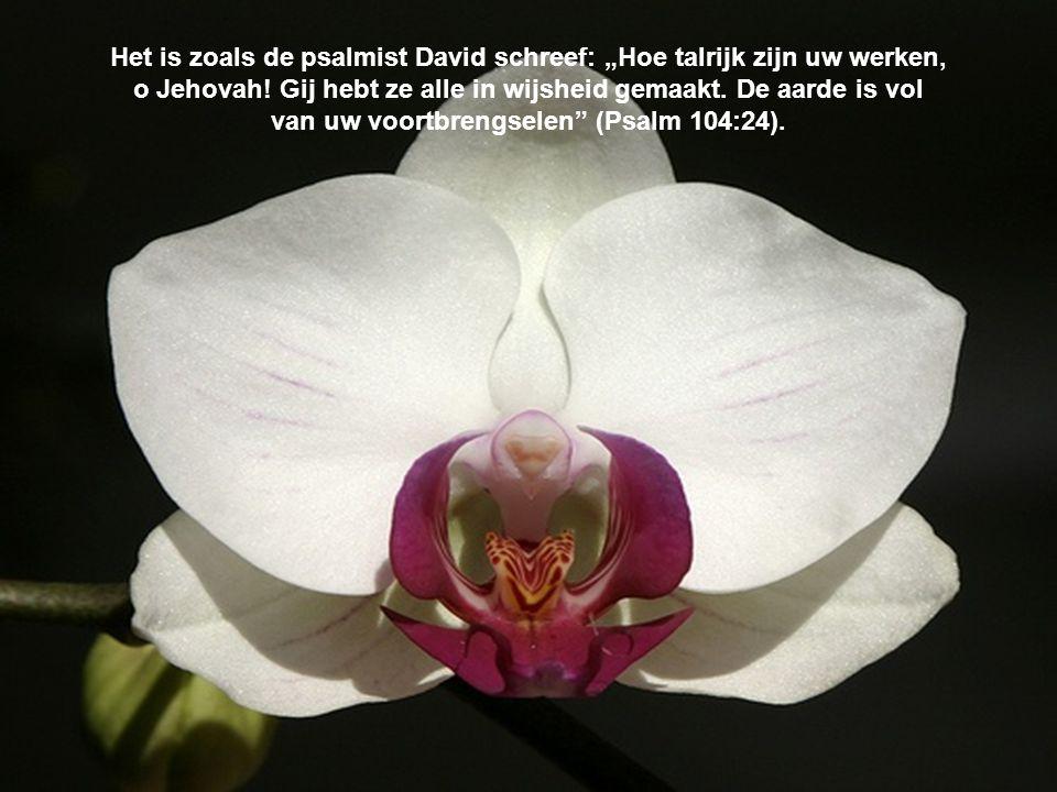 """Het is zoals de psalmist David schreef: """"Hoe talrijk zijn uw werken, o Jehovah."""