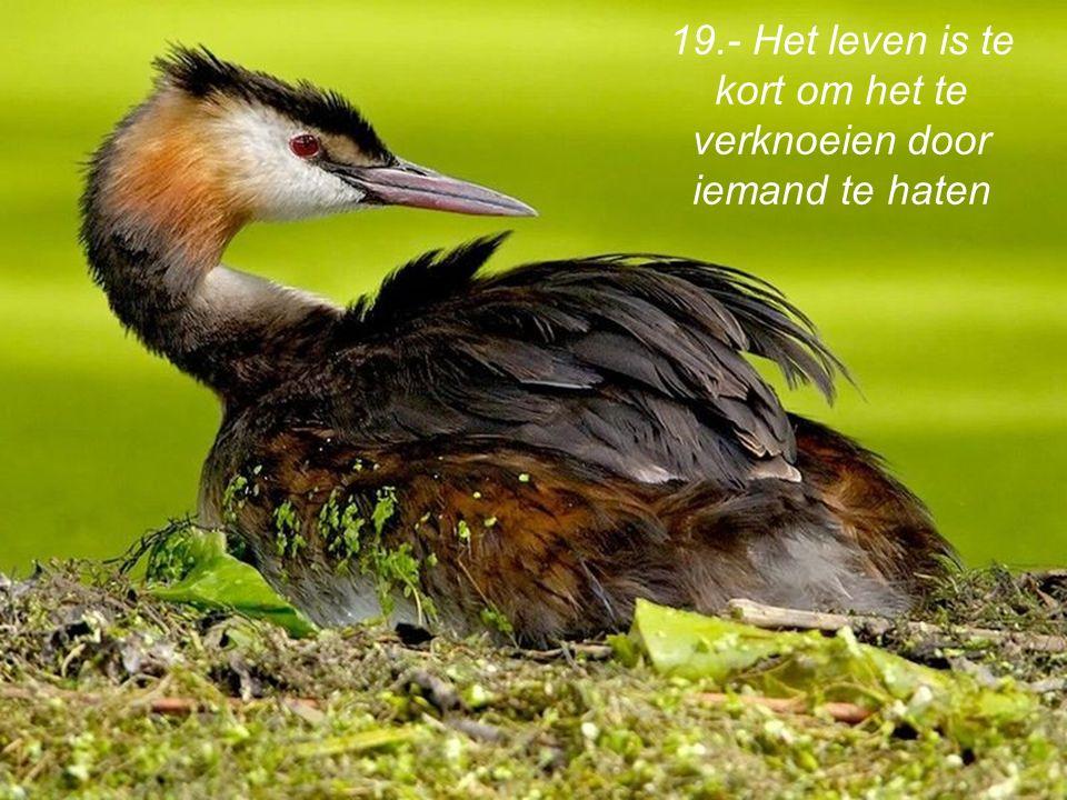 19.- Het leven is te kort om het te verknoeien door iemand te haten