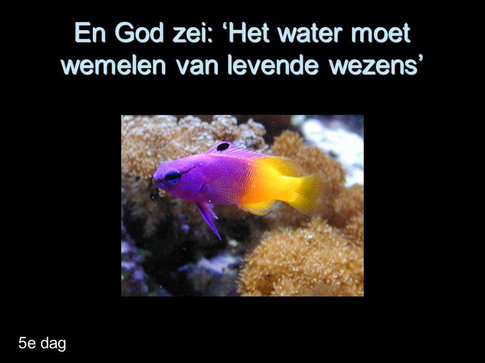 En God zei: 'Het water moet wemelen van levende wezens'