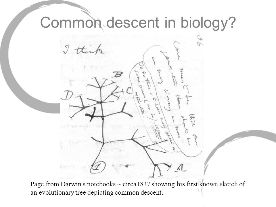 Common descent in biology