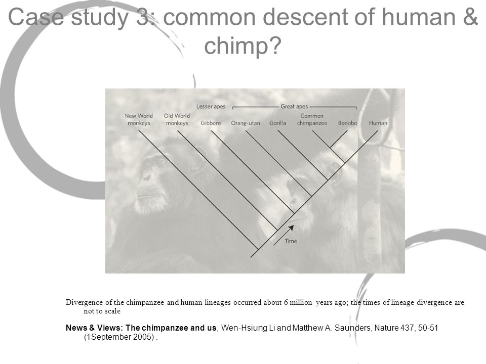 Case study 3: common descent of human & chimp