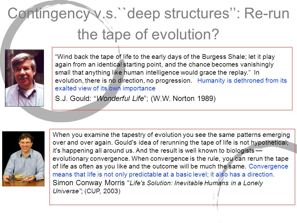 Contingency v.s.``deep structures'': Re-run the tape of evolution