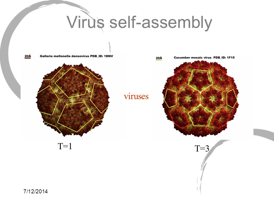 Virus self-assembly viruses T=1 T=3 4/4/2017 6